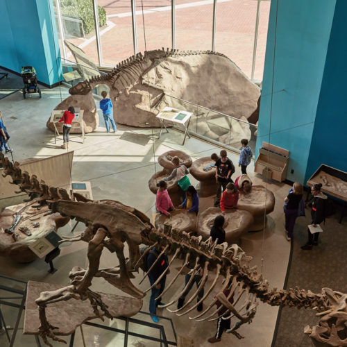Dig for dinosaurs at the Maryland Science Center