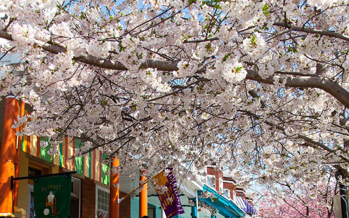 Looking down the street during the spring in Hampden, Baltimore.